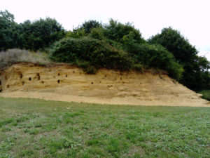 Sutton Knoll Pleistocene fossil island