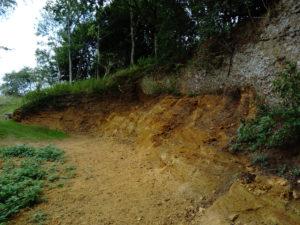 Sutton Knoll Pleistocene Red Crag