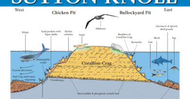 Sutton Knoll Pliocene seas fossil island