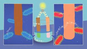 extracellular electron uptake microbes