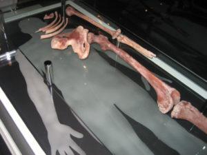 ruddle red ochre skeleton