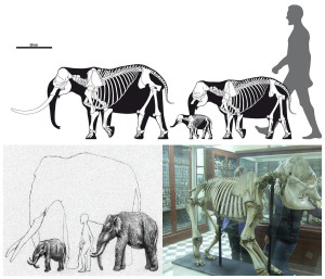 arran malta fossils