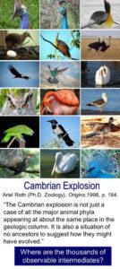 Darwins Dilemma birds beaks