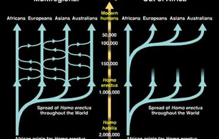 multiregional evolution theory Franz Weidenreich