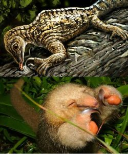 drepanosaurus divergent evolution convergent evolution