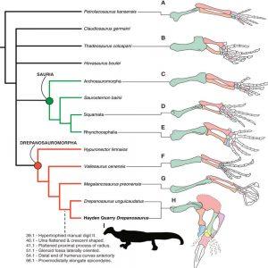 drepanosaurus divergent evolution convergent evolution forelimb anteaters