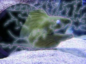 electric eels zombie prey animals shock