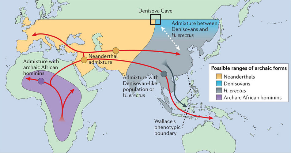out of africa theory Traditional theories tracing human origins to waves of migration from africa 60,000 years ago are being upended after scientists discovered.