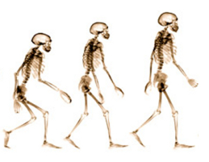 Evolution by Catastrophe – European Man