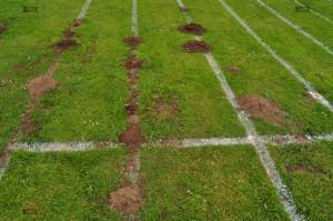 amazing animal behaviour moles digging in straight lines