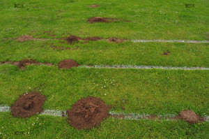 digging animals molehills mole hills along straight white lines