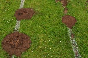 Cromer Youth Football Club Cromer Northrepps Playing Field molehills
