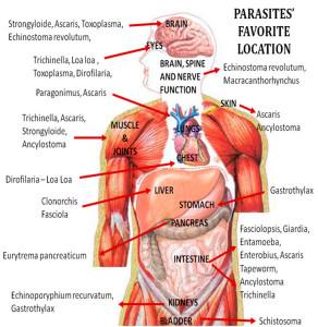 parasites humans life
