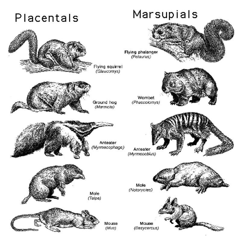 Natural building blocks of animals? Platypus dinosaurs not evolution?