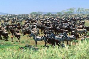 biological biology transmutations silica silicon herds animals