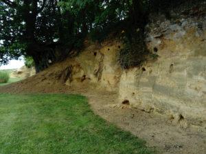 Sutton Knoll Pliocene Coralline Crag