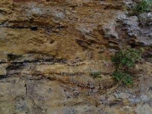 Rockhall Wood Quarry Pit Sutton