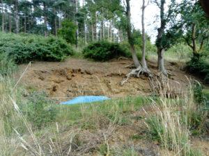 Rockhall Wood Lower Pleistocene Red Crag