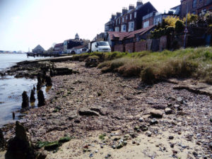 shell middens Mussel beds Gorleston On Sea