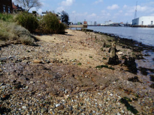 shell middens Mussel beds Great Yarmouth