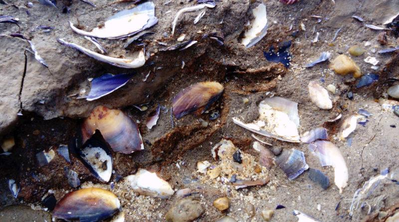 shell kitchen middens