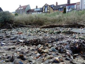 shell middens Mussel beds Norfolk England