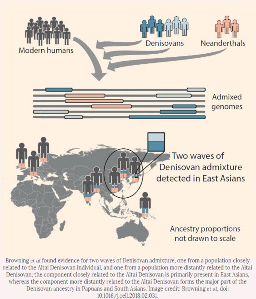 L3 Out of Africa Denisovans