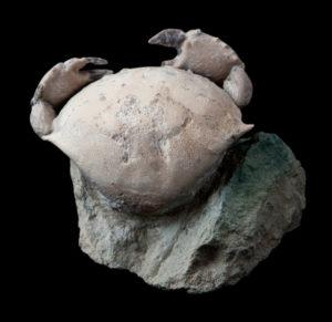 thunder crabs limestone