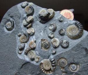 crustaceans fossils limestones sandstones