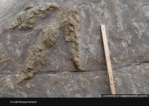 dinosaur trackways preservation