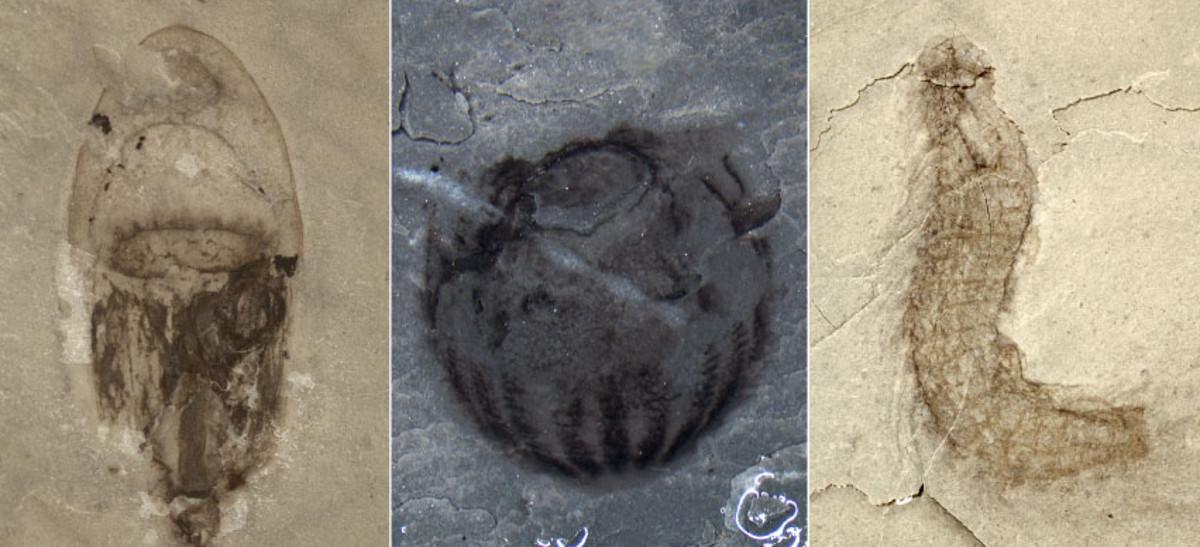 Death assemblages or Lagerstätte