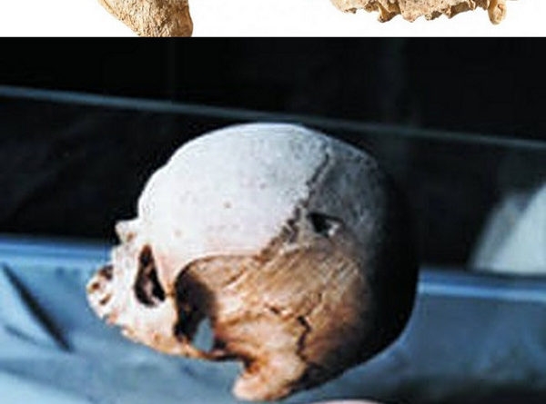 Malta elongated skulls hypogeum