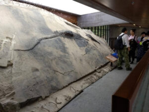 instant fossilisation marine reptiles china