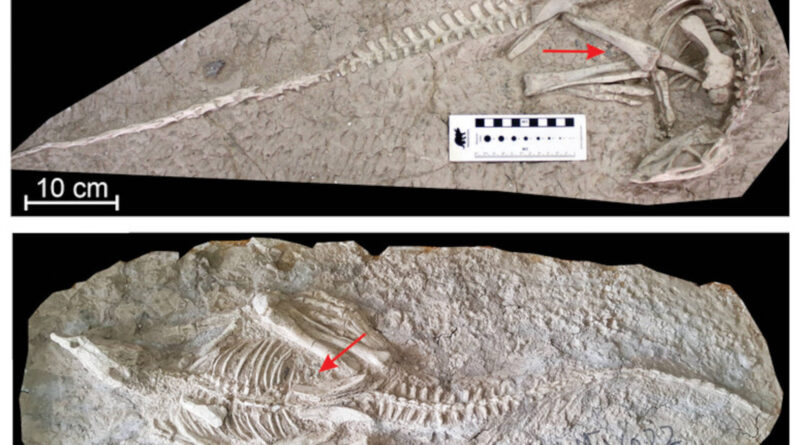 asphyxiation instant fossilization fossils