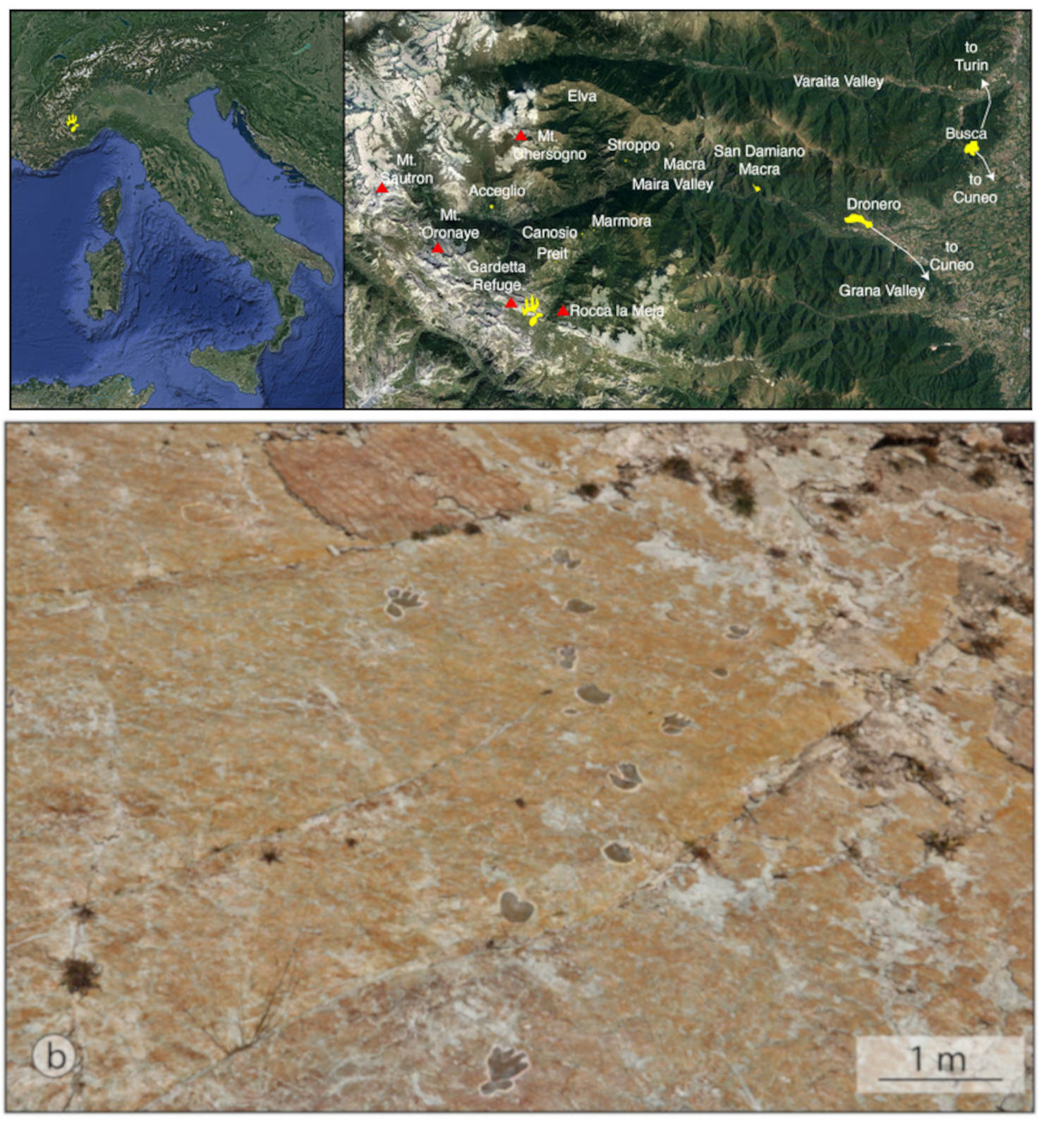 Archosauriform footprints in the Lower Triassic of Western Alps and their role in understanding the effects of the Permian-Triassic hyperthermal