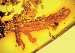 animals in amber salamander why how found trapped