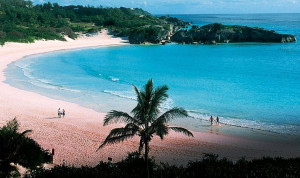 red pink coloured beaches sandy coral where