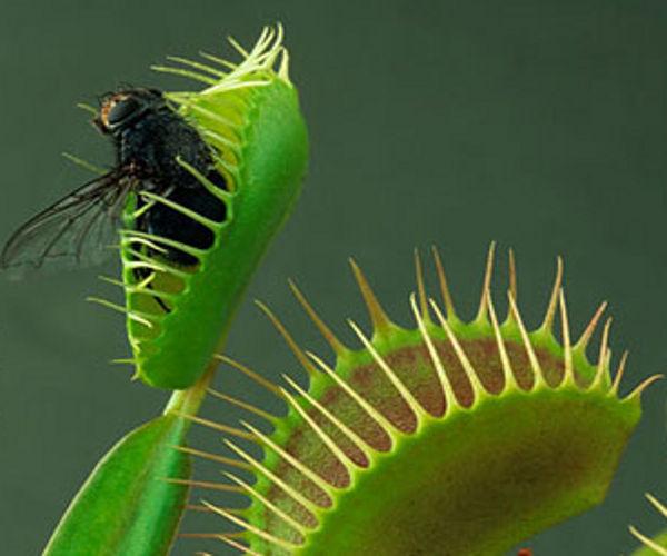 carolina bays venus fly traps electromagnetic evolution electric universe theory