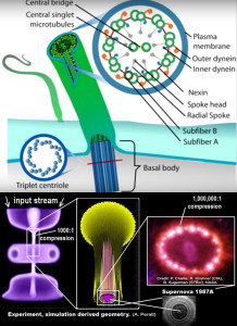 consciousness microtubules plasma perrat