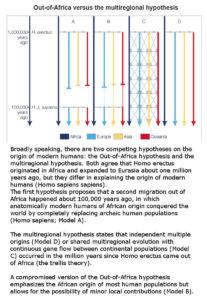 Out of Africa versus the multiregional hypothesis  Franz Weidenreich