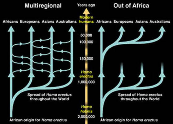 Out of Africa alternative theories