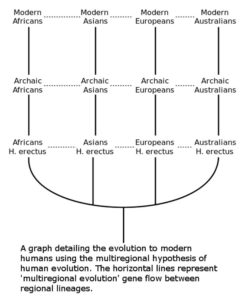 Out of Africa alternative theory recent African origin of modern humans theory