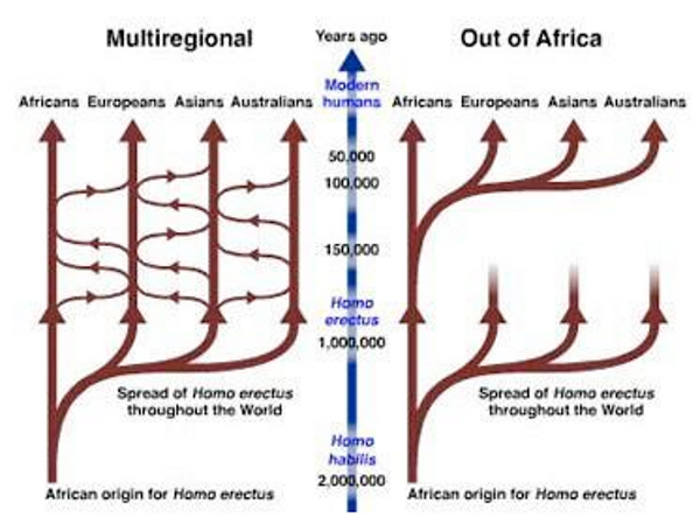 the out of africa thesis vs the multiregional thesis Multiregionalism or the multiregional anytime spanning late pleistocene 'out of africa' exit a test of the multiregional hypothesis phd thesis.
