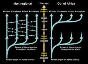 multiregional evolution theory Franz Weidenreich