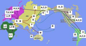 L3 evolution out of Africa migration