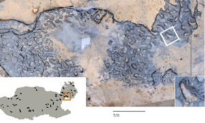 hominin footprints fossilized instant