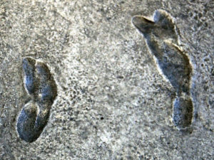 humanoid human footprints fossilised