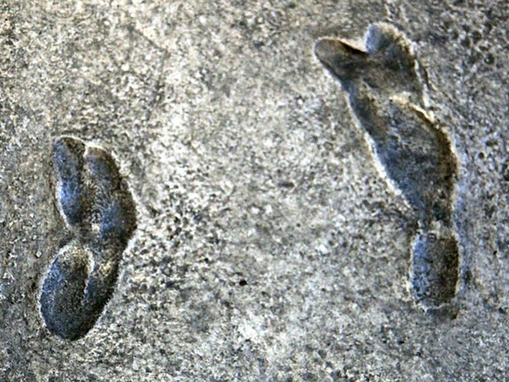 humanoid human footprints fossilised
