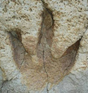 dinosaur tracks foot prints preserved