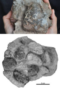 crocodile eggs in dinosaur nest theropod